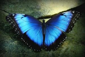 bluemorph